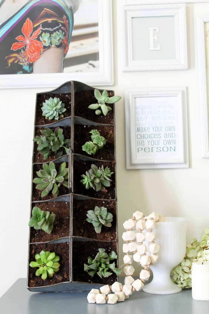 A Vertical Succulent Garden Can Be Propped On A Table Or Hung On The Wall.