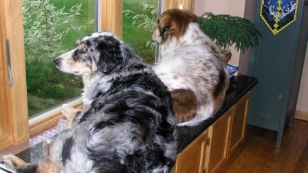 Due to a risk of overheating, it's a good idea to let dogs live indoors, especially during particularly warm summer months. (Photo courtesy of Angie's List member Jon Y. of Eden Prairie, Minnesota)
