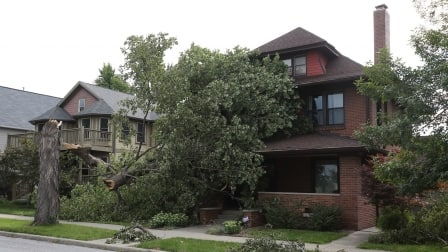 tree falls on house homeowner needs emergency fund (Photo by Steve Mitchell)