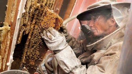 how to get rid of honey bees in a wall