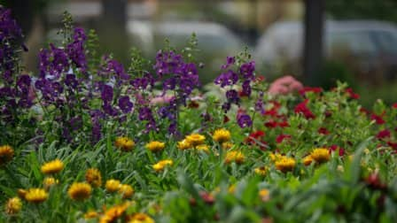 There are all types of fresh annuals available that will scoff at frost and give you color to enjoy throughout fall, say Fulmer. (Photo courtesy of Chalet Landscape Nursery and Garden Center)