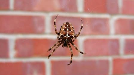 Spider in front of wall