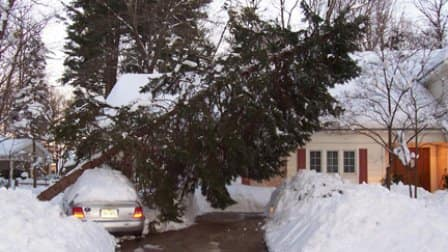 A 2010 winter storm dumped 30 inches of snow on Angie's List member William C.'s Columbia, Md. home, knocking down multiple trees and damaging his Audi.