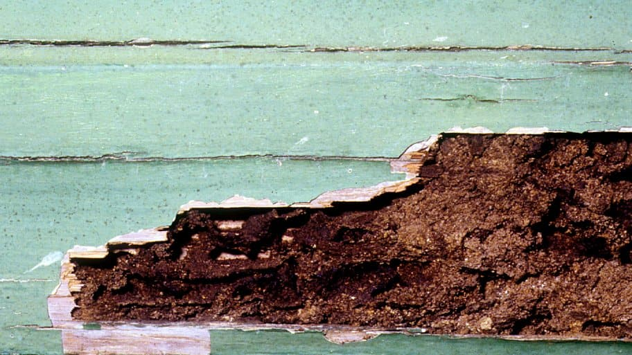 Termite damage to structure.