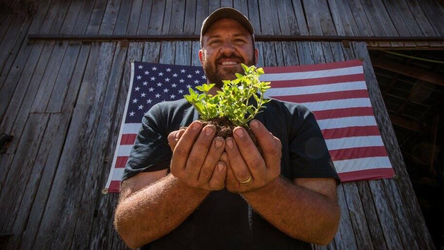 farmer holding oregano plant