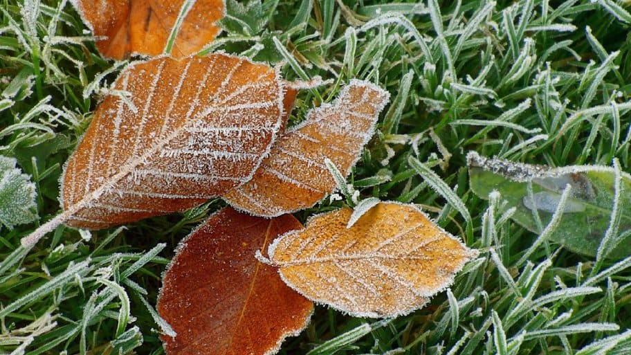 Prepare your lawn and gardens now for winter for beautiful spring growth. (Photo courtesy of Darell Youngquest)