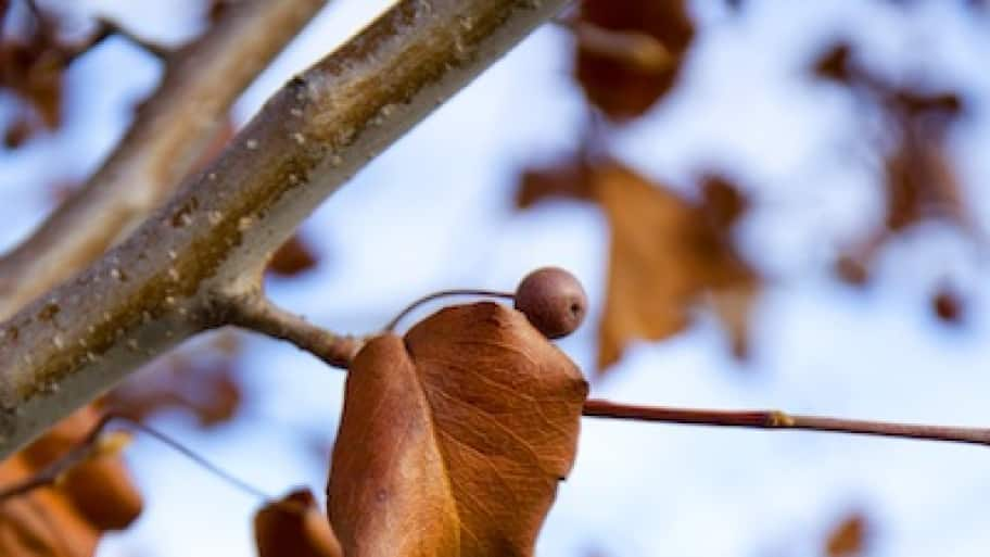 tree branch with fall leaves