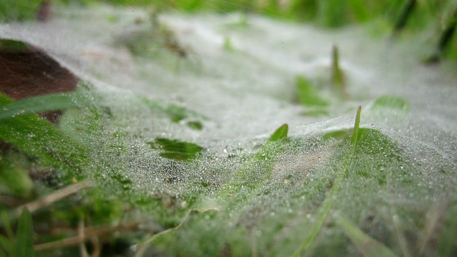 Mycelium: What are These Webs Doing to My Lawn? | Angie's List