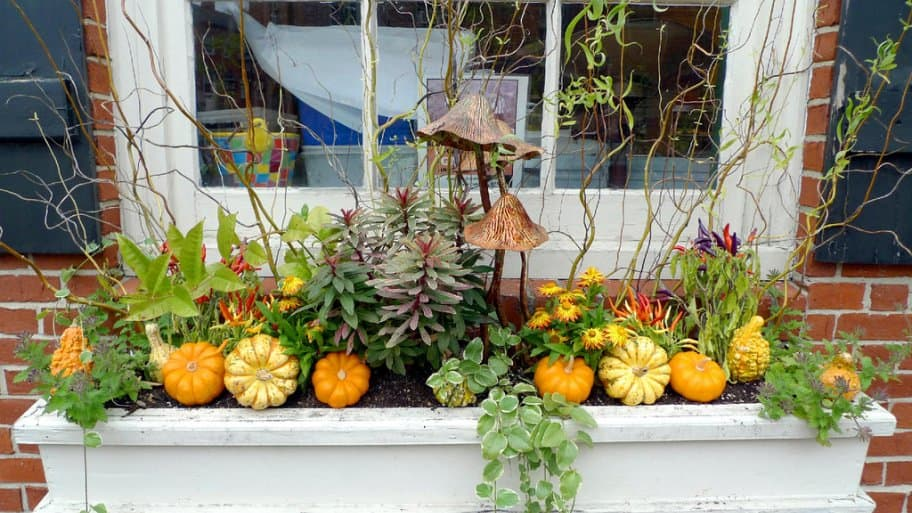 a fall window box with plants, small pumpkins and gourds
