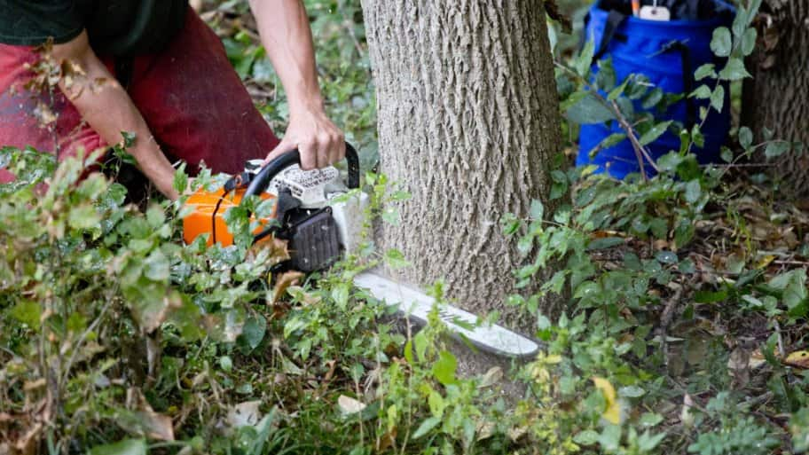 5 Invasive Trees And How To Destroy Them Angie S List