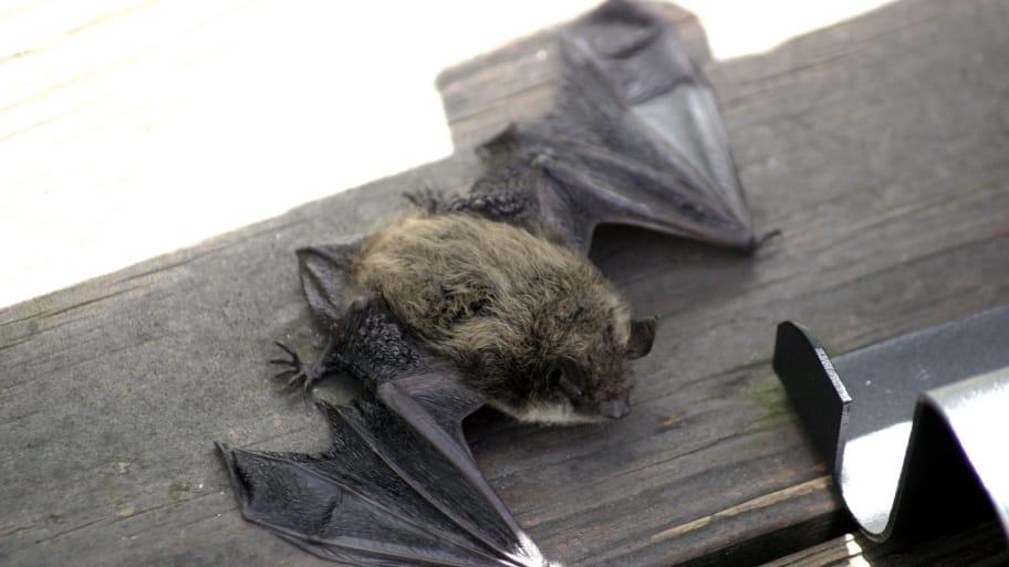 a bat lying on deck railing
