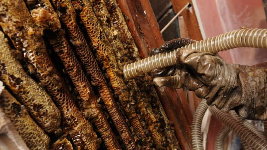 Ddiy pest control a dont do it yourself guide angies list bee removal solutioingenieria Image collections