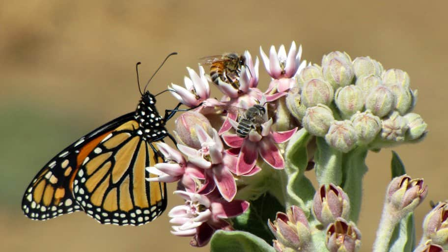 butterfly and bees pollinate flower