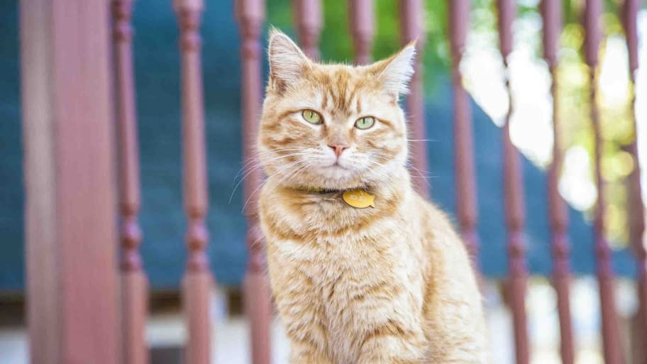cat sits on deck outdoors
