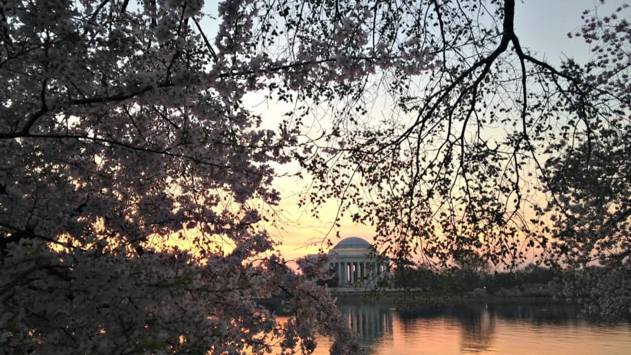 Want to avoid the traffic and crowds at the Tidal Basin? Try an early morning visit to peacefully capture the cherry blossoms at sunrise. (Photo by Jason Hargraves)