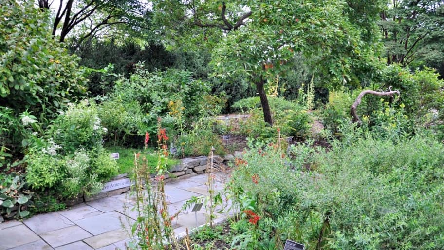 Beyond Xeriscaping: How To Create A Low Water Landscape Design For Your Yard