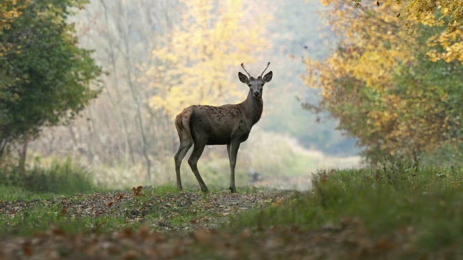 deer standing in morning fog