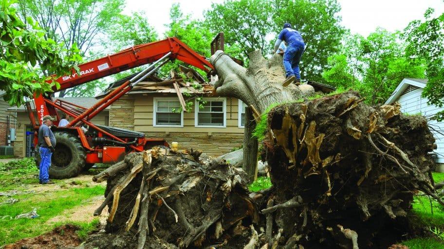 Tree falls on home