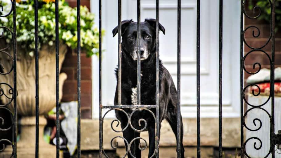 dog behind metal fence