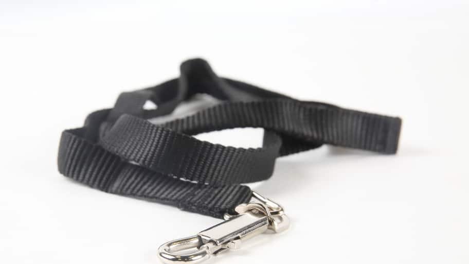 a dog leash