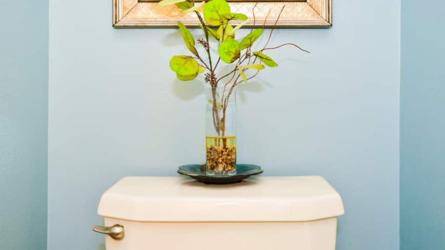Toilet tank with plant on top