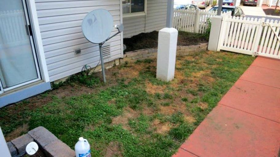Dead or dying grass can be a frustrating problem for homeowners to solve. (Photo courtesy of member Kurt D.)