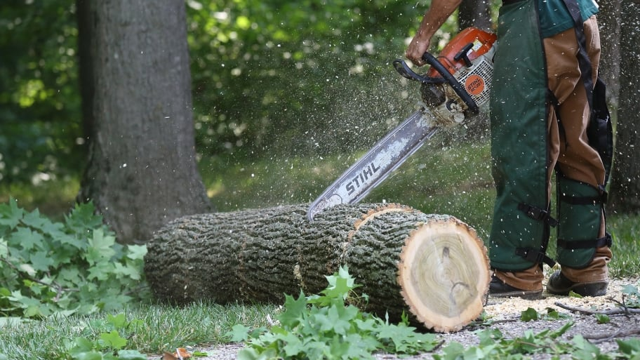 Tractor Man On Cutting Trees : Should you remove that tree ways to tell angie s list