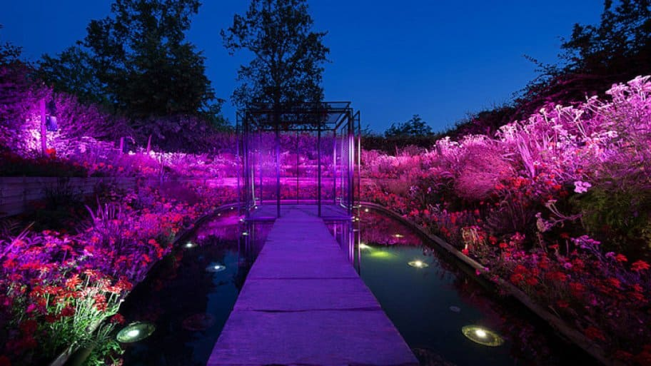 garden lit with purple LED lights