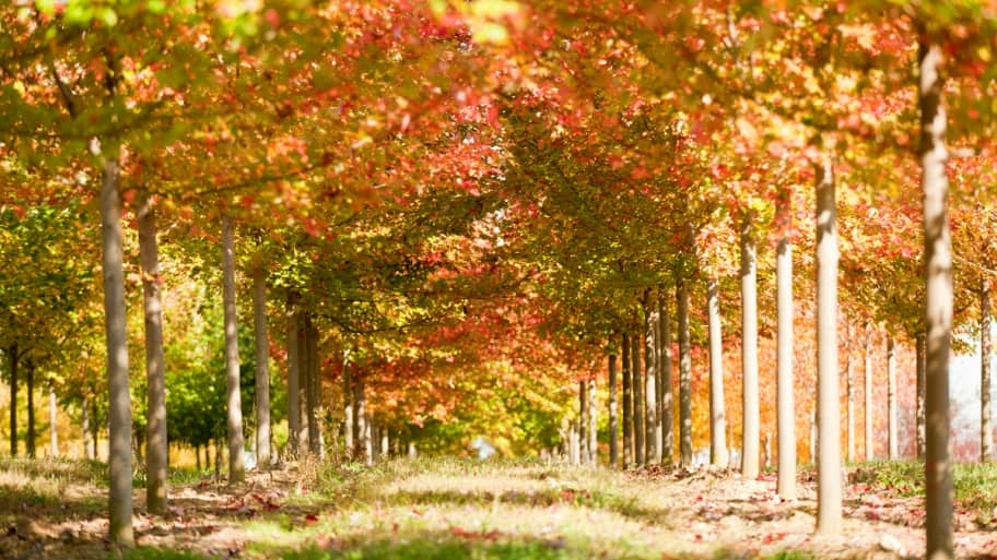 Plant Trees In The Fall Angie S List