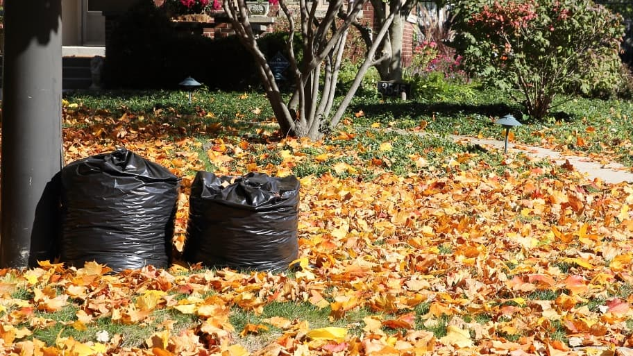 bagging up fall leaves