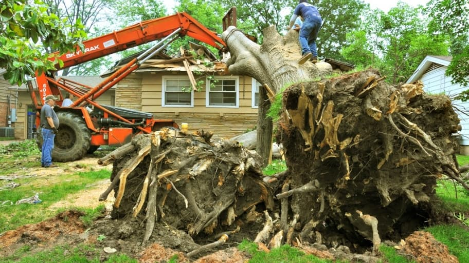 6 Tips to Safely Remove Trees