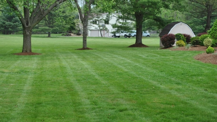 How To Fertilize Your Lawn Without Killing Gr Angie S List