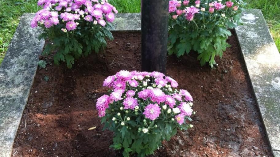 Fall Flowerbed Gardening Tips Angie S List