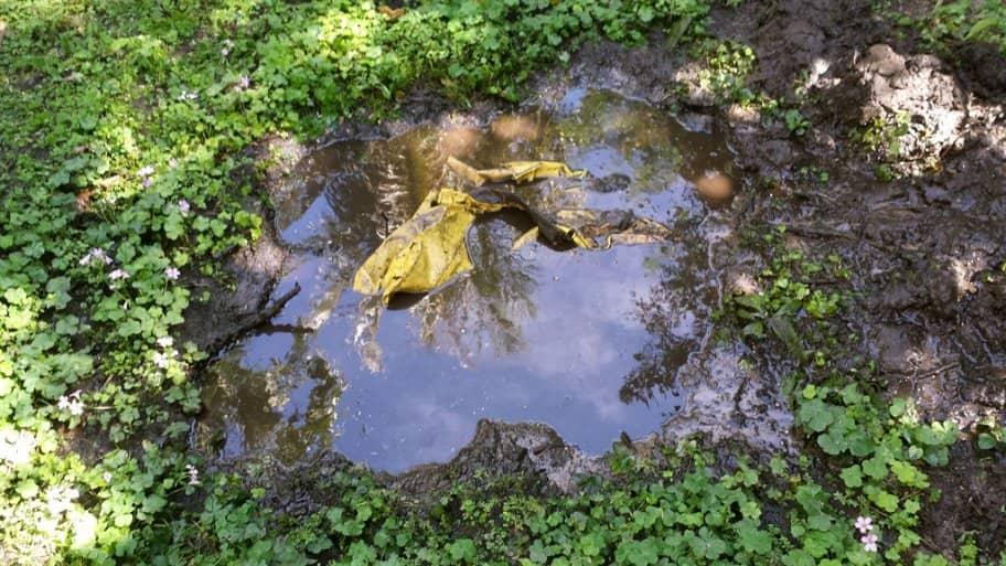wet septic drain field
