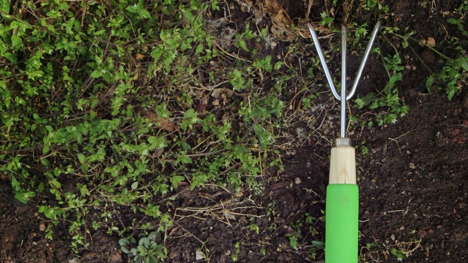 gardening tool for planting cover crops