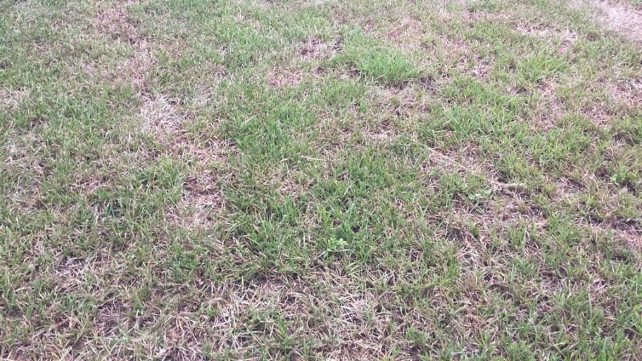Stop Killing Your Grass 5 Tips Your Lawn Wants You To