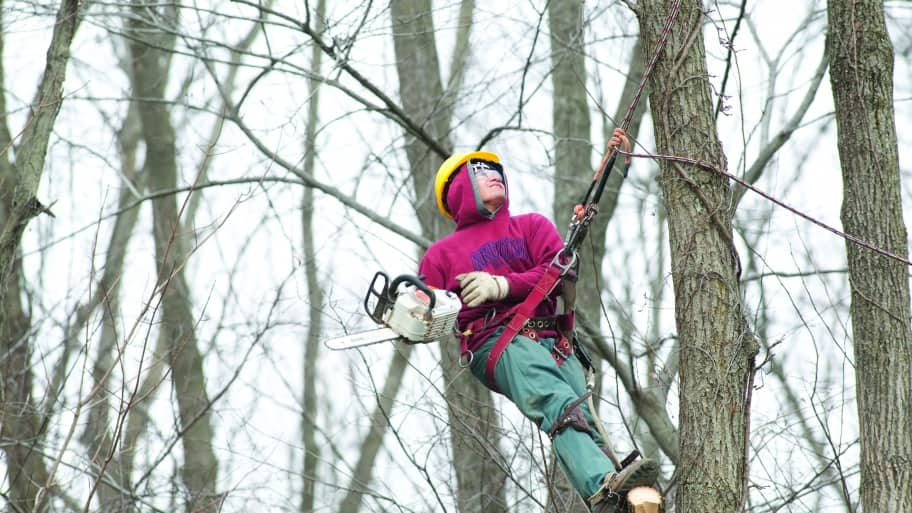 a tree service worker with a chainsaw in a tree
