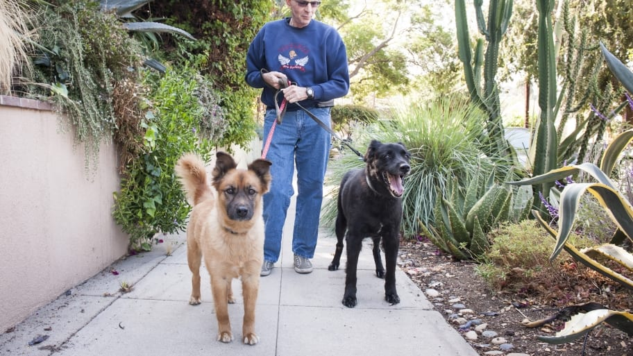 Can A Woman Be A Professional Dog Walker
