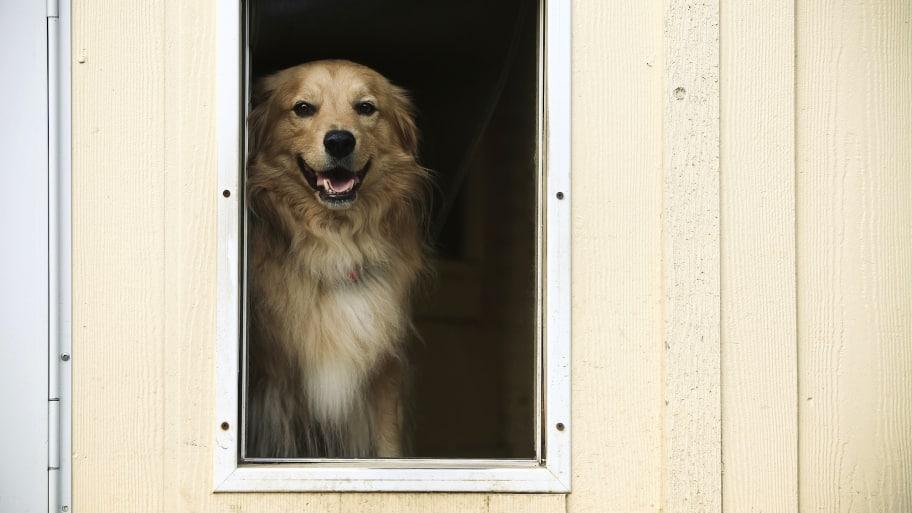 dog waits behind pet door