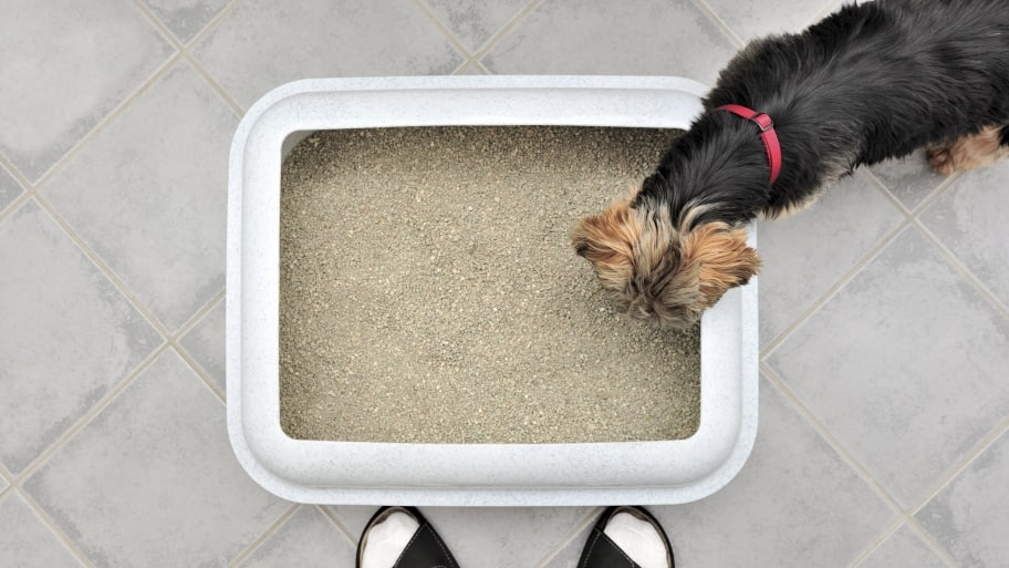 Can You Teach A Dog To Use A Litter Box