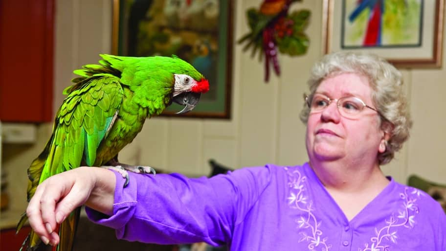 military macaw parrot on woman's arm