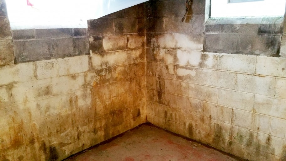 mold on basement walls and floor