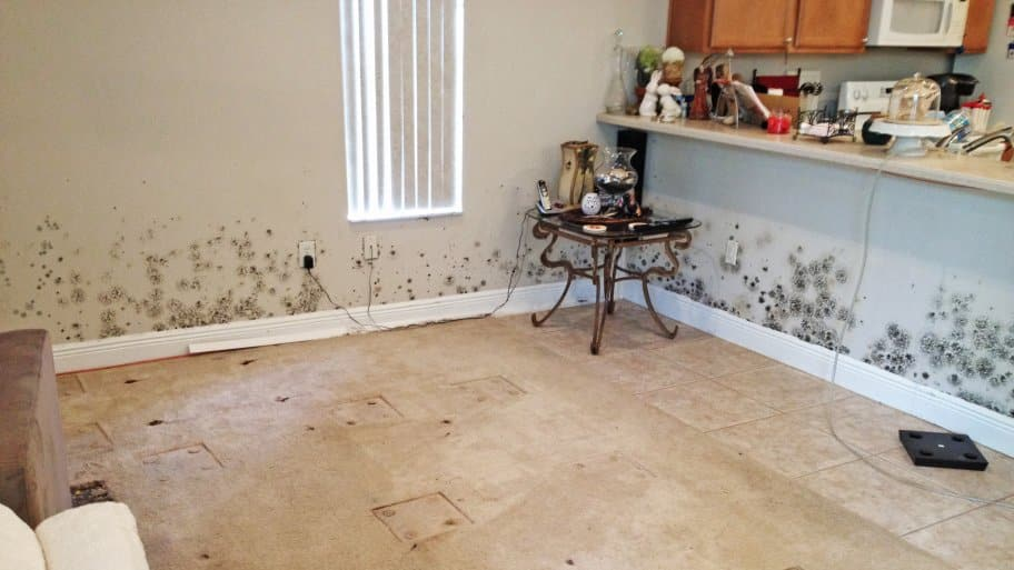 Home Contaminated With Mold