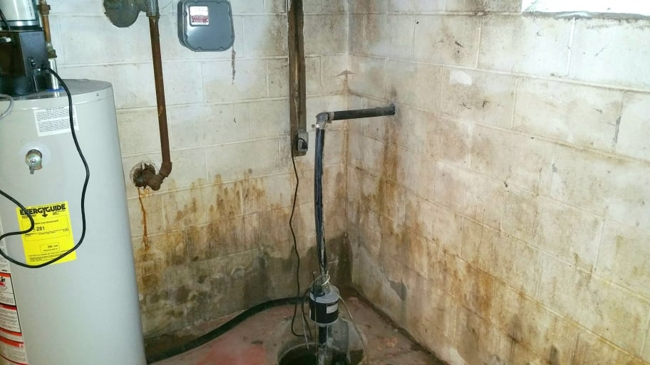 mold in home basement