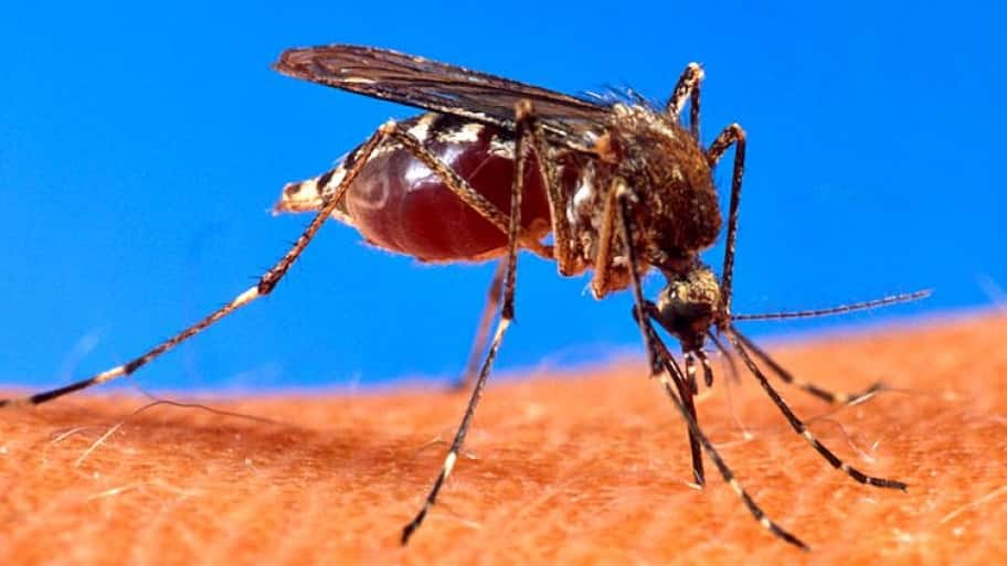 Mosquitoes Can Ruin Many Outdoor Activities, So Learn How To Keep Them Out  Of Your Yard And Away From Your Gatherings. (Photo Courtesy Of USDA)