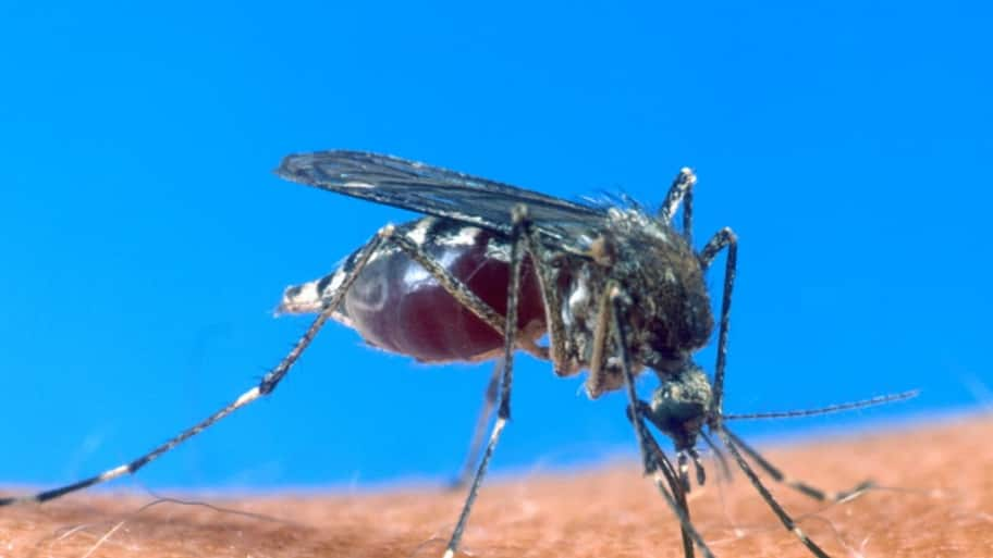Think about using an insect repellant if working in the yard. (Photo courtesy of the U.S. Department of Agriculture)