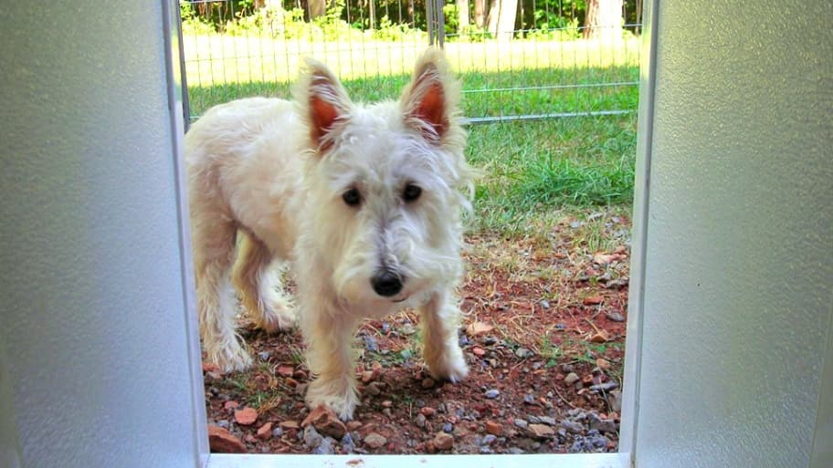 A pet door can open your home to security risks. Follow these tips to reduce them. (Photo courtesy of Valery L. of Troy, Virginia)