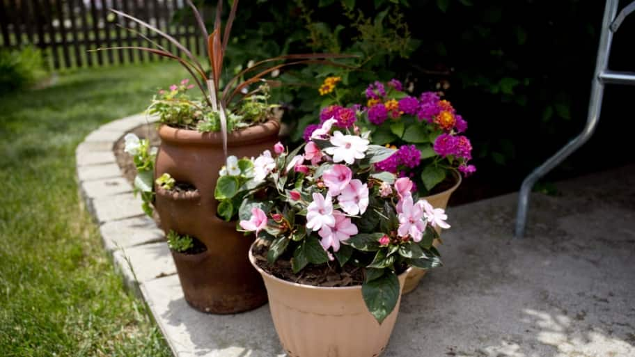 potted plants, flowers, patio