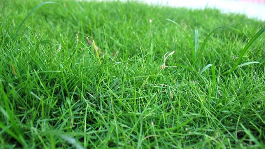 Best Time To Plant Grass Seed In Columbus Ohio