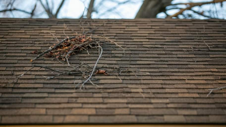 roof with debris